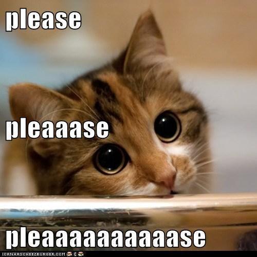 little please cat